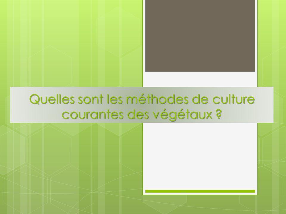 Quelles sont les méthodes de culture courantes des végétaux