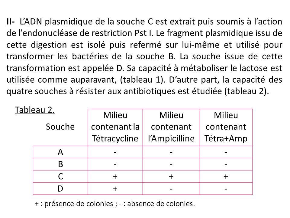 Milieu contenant la Tétracycline Milieu contenant l'Ampicilline