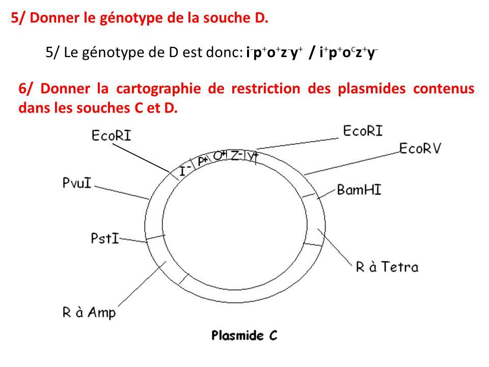 5/ Donner le génotype de la souche D.