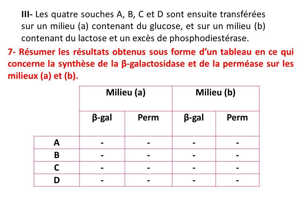 III- Les quatre souches A, B, C et D sont ensuite transférées sur un milieu (a) contenant du glucose, et sur un milieu (b) contenant du lactose et un excès de phosphodiestérase.