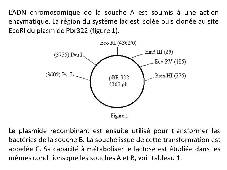 L'ADN chromosomique de la souche A est soumis à une action enzymatique
