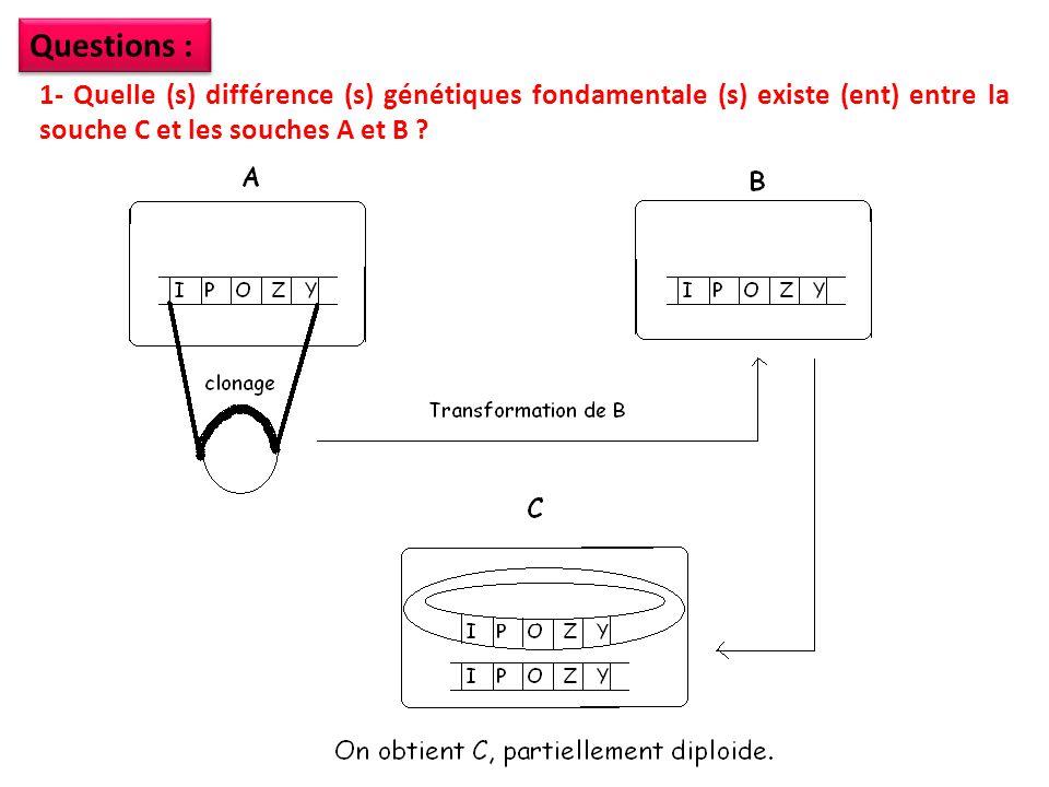 Questions : 1- Quelle (s) différence (s) génétiques fondamentale (s) existe (ent) entre la souche C et les souches A et B