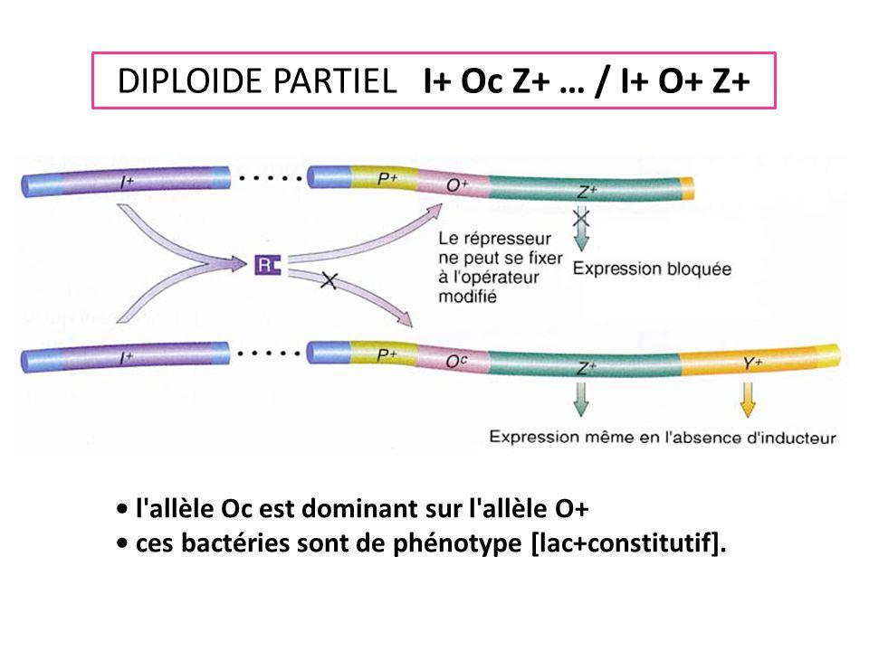 DIPLOIDE PARTIEL I+ Oc Z+ … / I+ O+ Z+