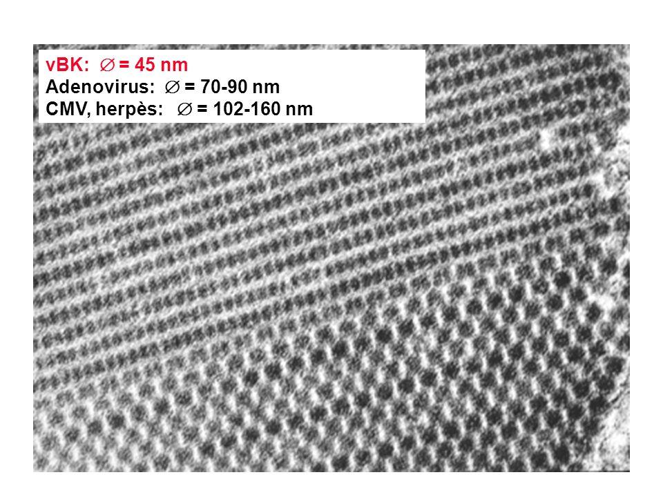 vBK:  = 45 nm Adenovirus::  = 70-90 nm CMV, herpès:  = 102-160 nm