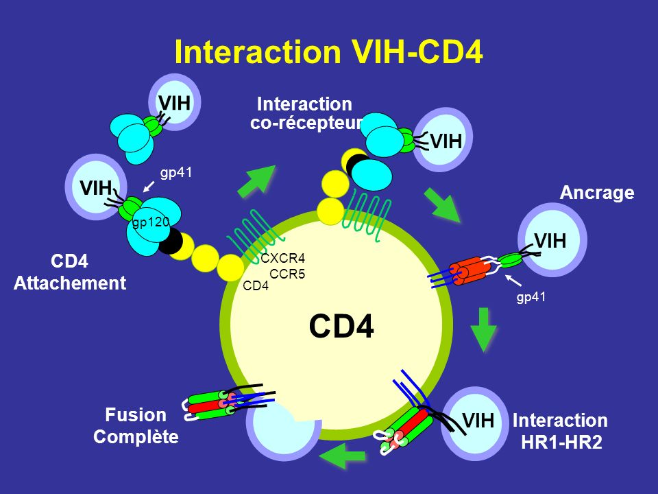 Interaction VIH-CD4 CD4 VIH VIH VIH VIH VIH Interaction co-récepteur