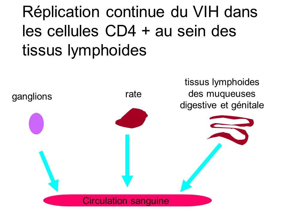Réplication continue du VIH dans les cellules CD4 + au sein des tissus lymphoides