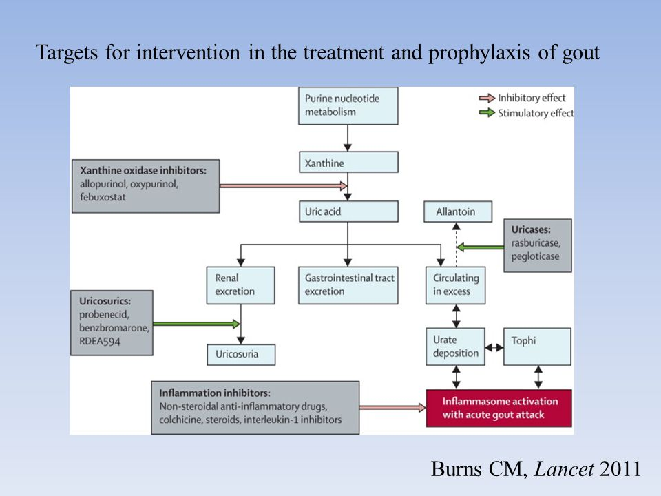 Targets for intervention in the treatment and prophylaxis of gout