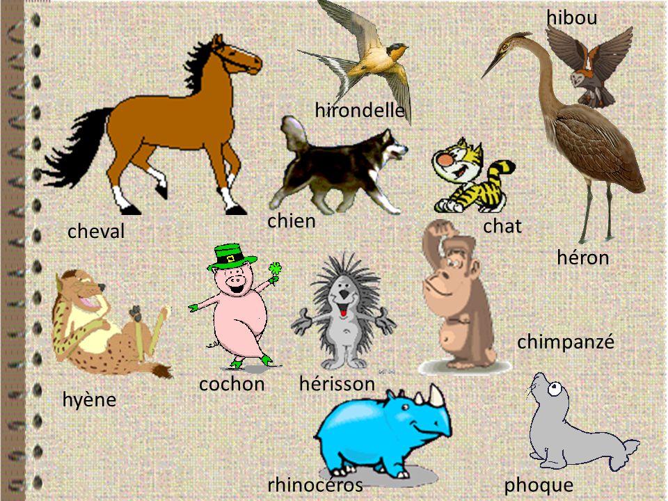 hibou hirondelle chien chat cheval héron chimpanzé cochon hérisson hyène rhinocéros phoque