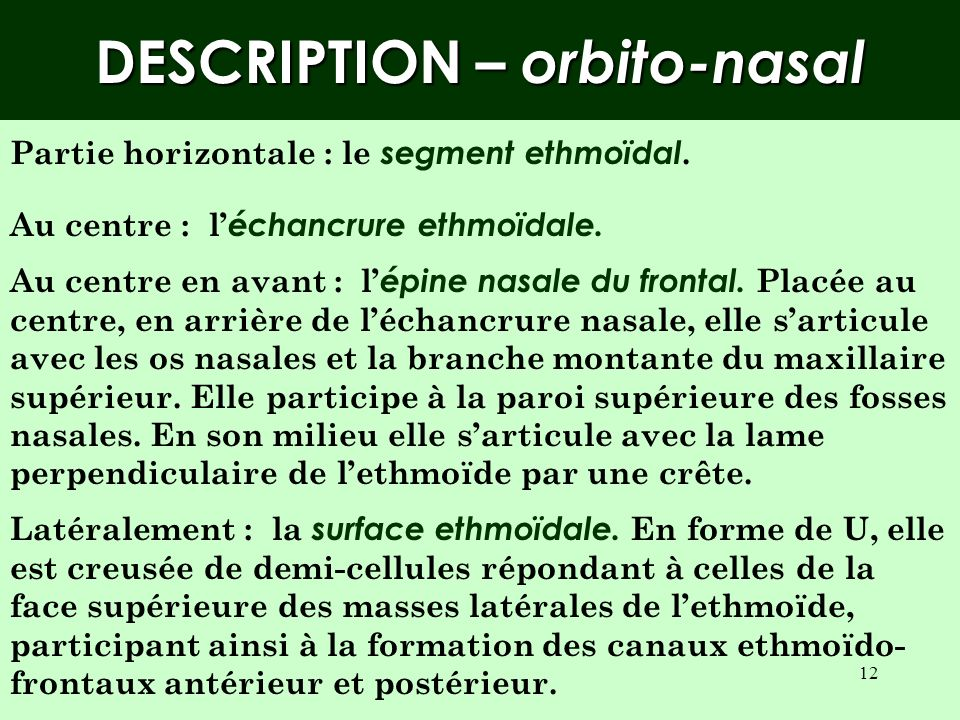 DESCRIPTION – orbito-nasal