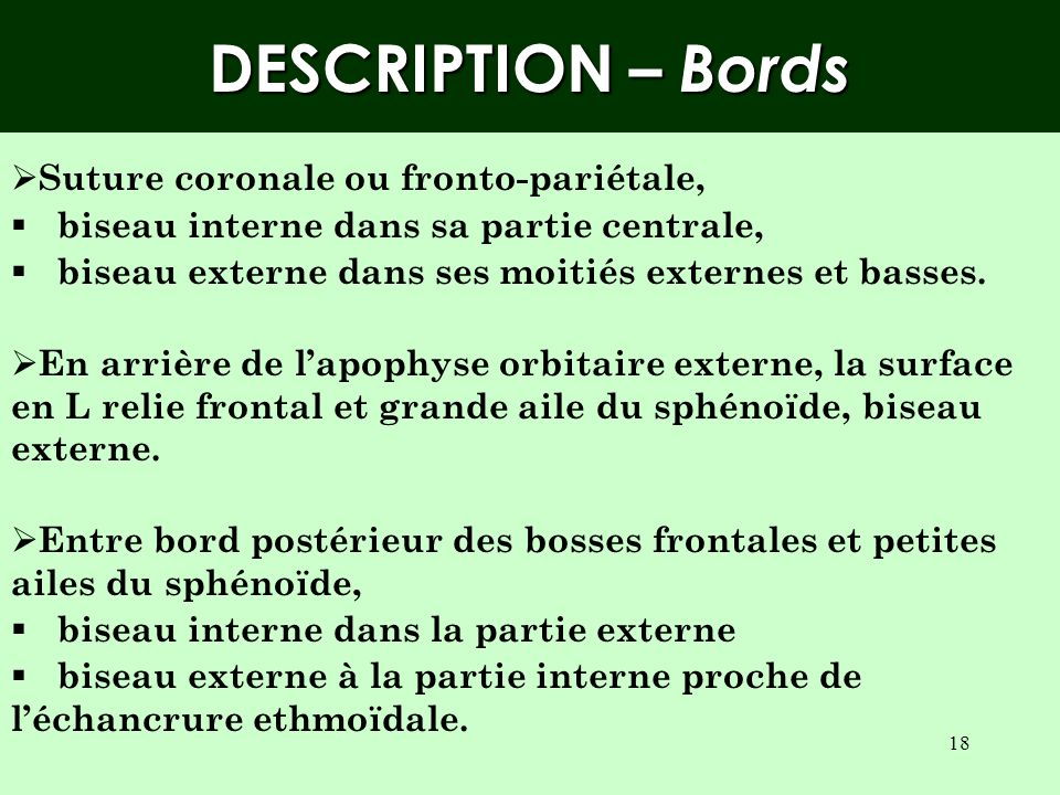 DESCRIPTION – Bords Suture coronale ou fronto-pariétale,