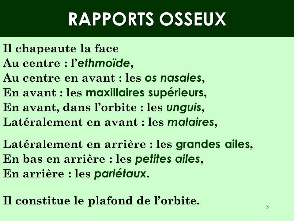 RAPPORTS OSSEUX Il chapeaute la face Au centre : l'ethmoïde,
