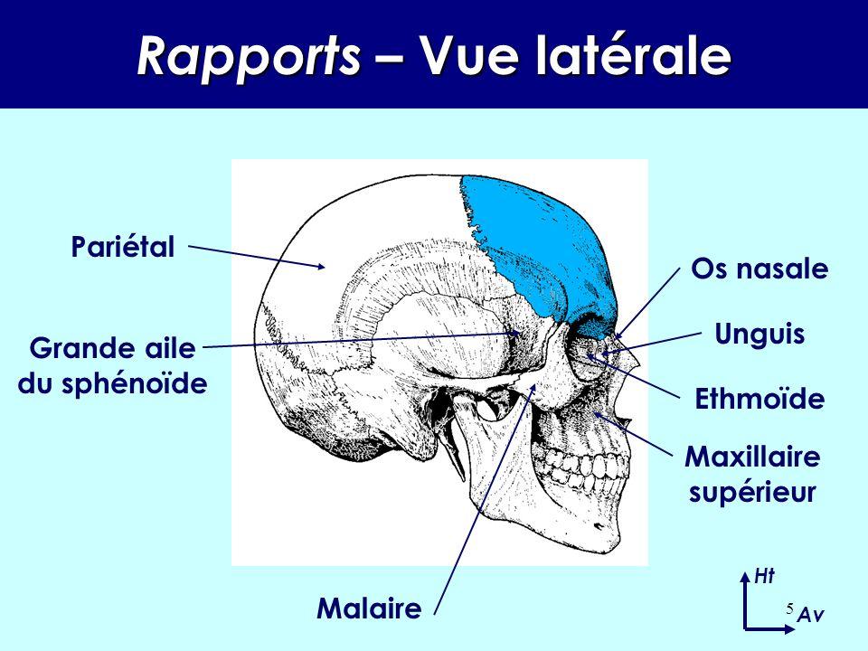Rapports – Vue latérale