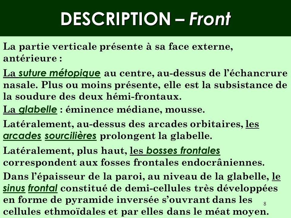 DESCRIPTION – Front La partie verticale présente à sa face externe, antérieure :