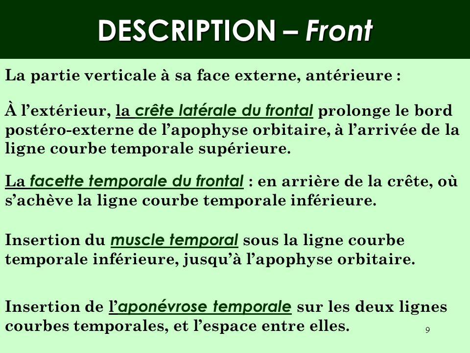 DESCRIPTION – Front La partie verticale à sa face externe, antérieure :