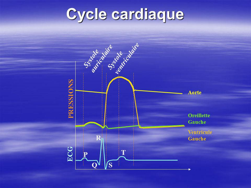 Cycle cardiaque auriculaire Systole ventriculaire Systole ECG