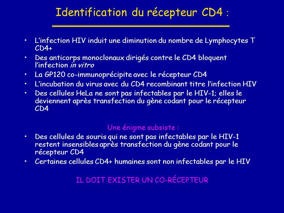 Identification du récepteur CD4 :