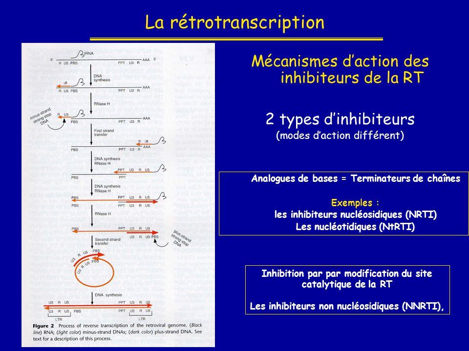 La rétrotranscription