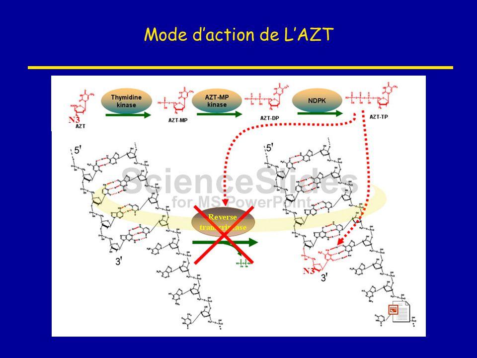 Mode d'action de L'AZT N3 N3