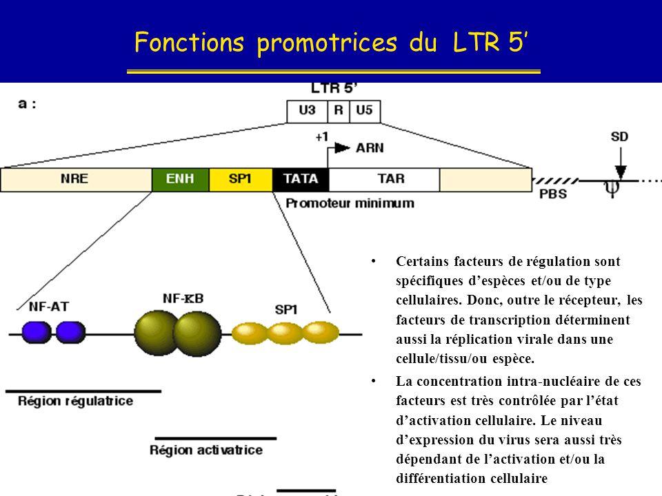 Fonctions promotrices du LTR 5'