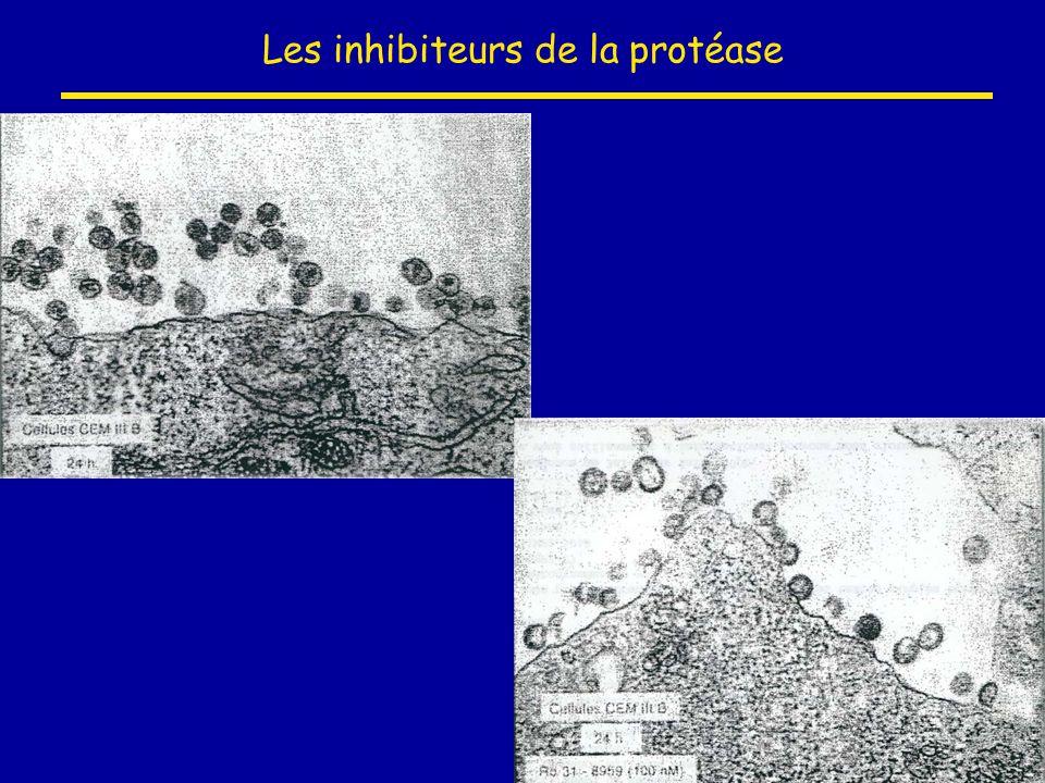 Les inhibiteurs de la protéase