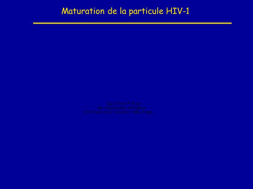 Maturation de la particule HIV-1
