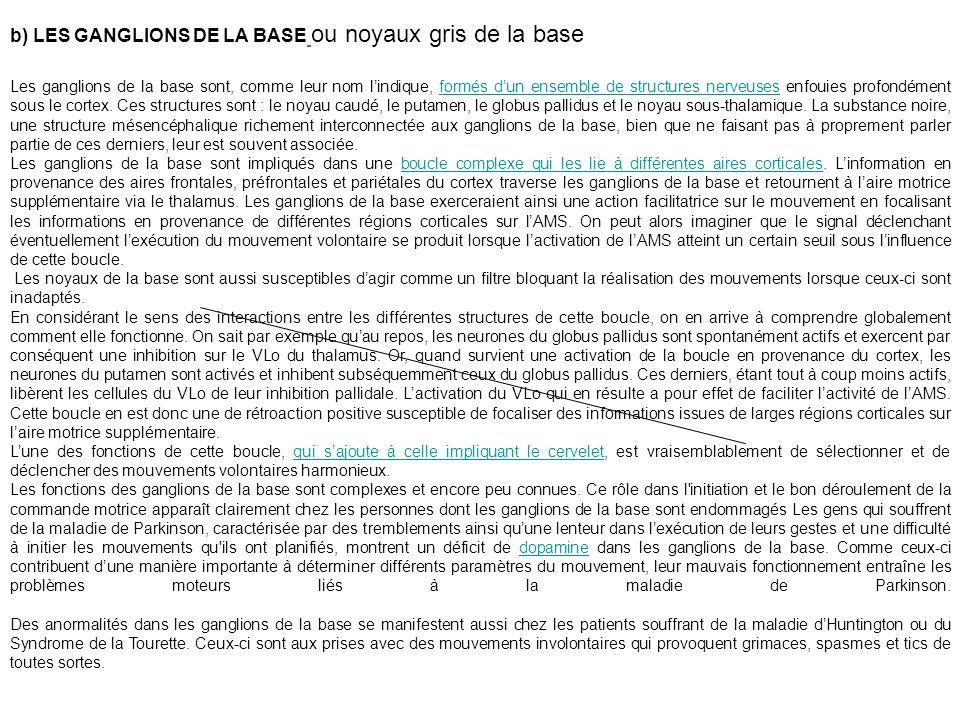 b) LES GANGLIONS DE LA BASE ou noyaux gris de la base