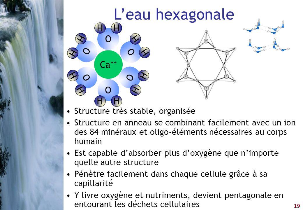 L'eau hexagonale O H O H O H Ca++ O H O H O H