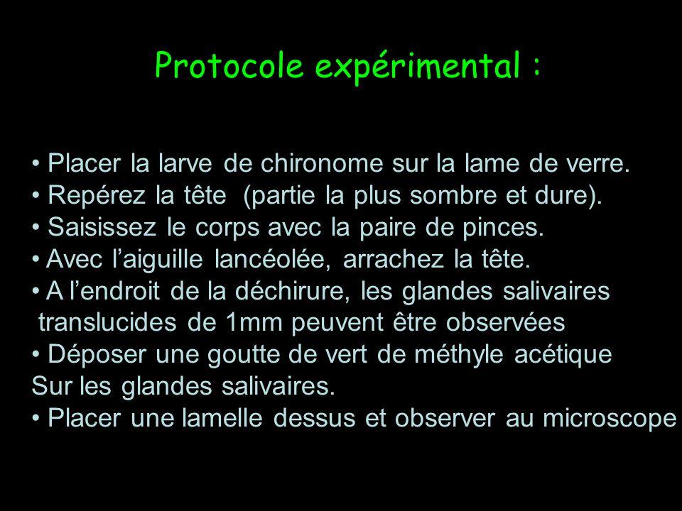 Protocole expérimental :