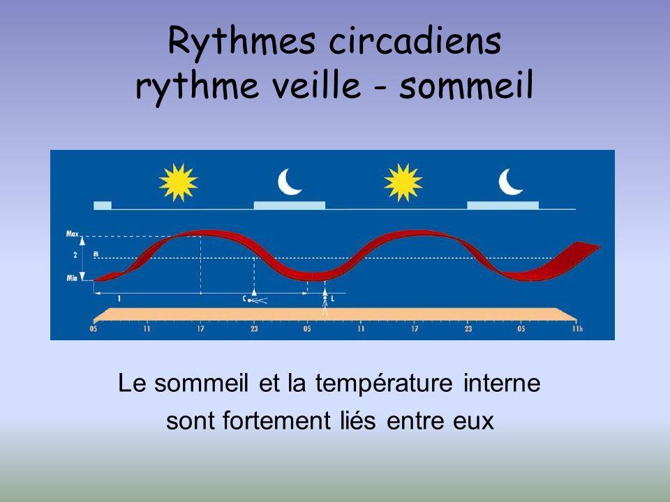 Rythmes circadiens rythme veille - sommeil