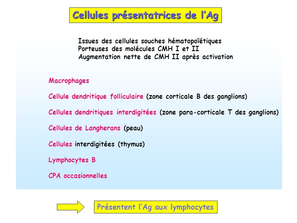 Cellules présentatrices de l'Ag