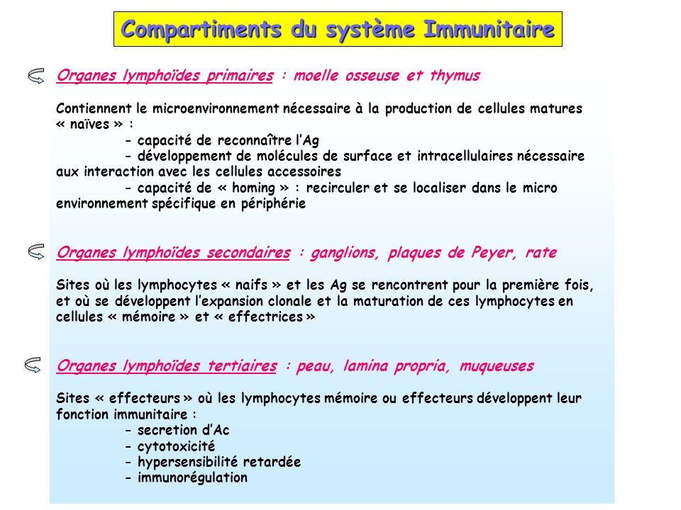 Compartiments du système Immunitaire