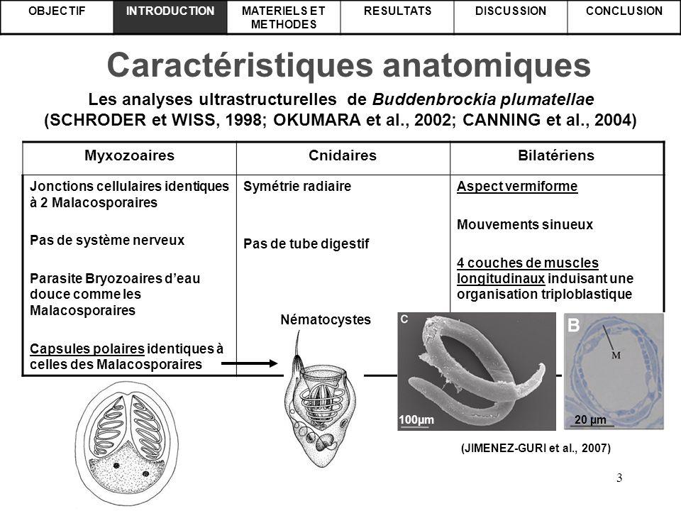 Caractéristiques anatomiques