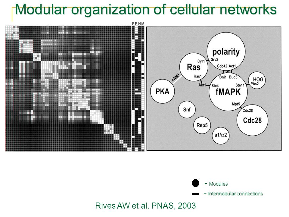 Modular organization of cellular networks