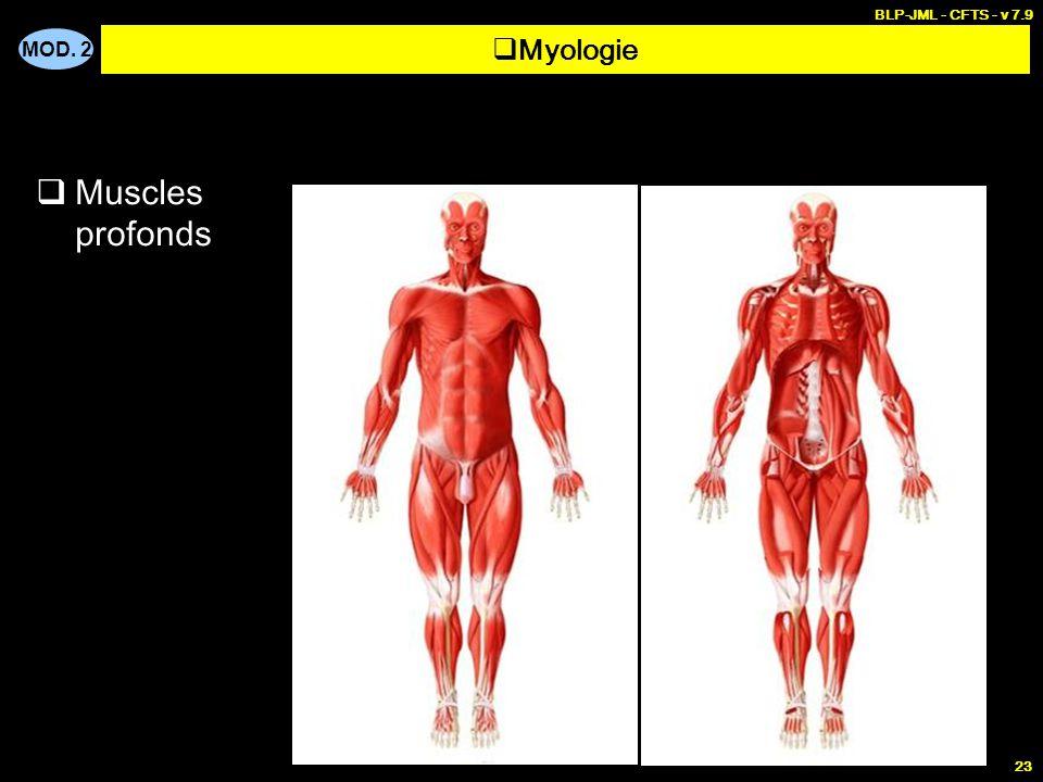 BLP-JML - CFTS - v 7.9 Myologie Muscles profonds