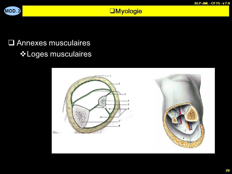 BLP-JML - CFTS - v 7.9 Myologie Annexes musculaires Loges musculaires