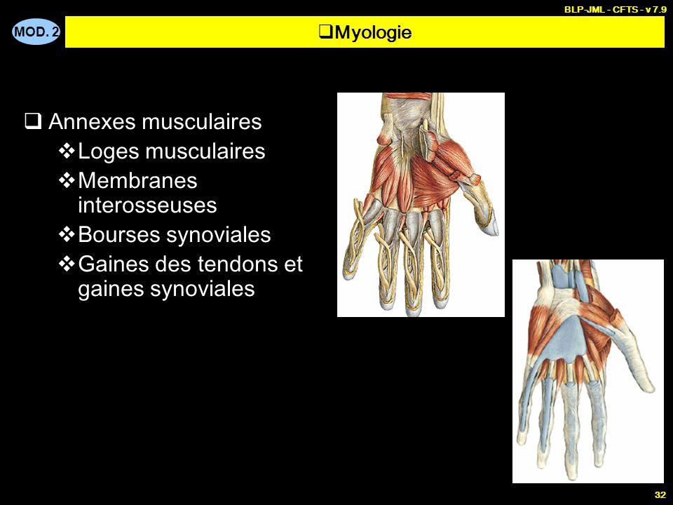 Membranes interosseuses Bourses synoviales