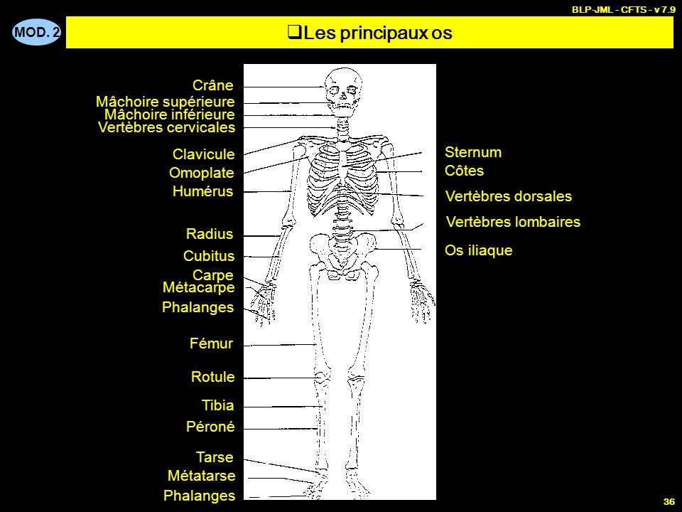Les principaux os Crâne Mâchoire supérieure Mâchoire inférieure