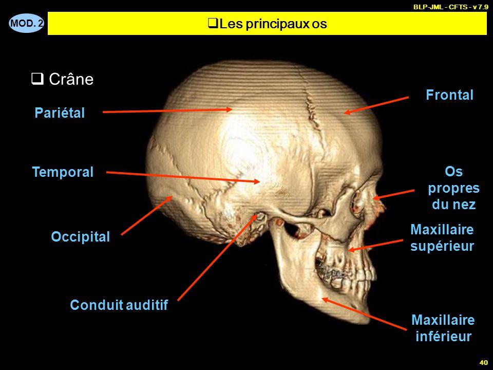 Crâne Les principaux os Frontal Pariétal Temporal Os propres du nez