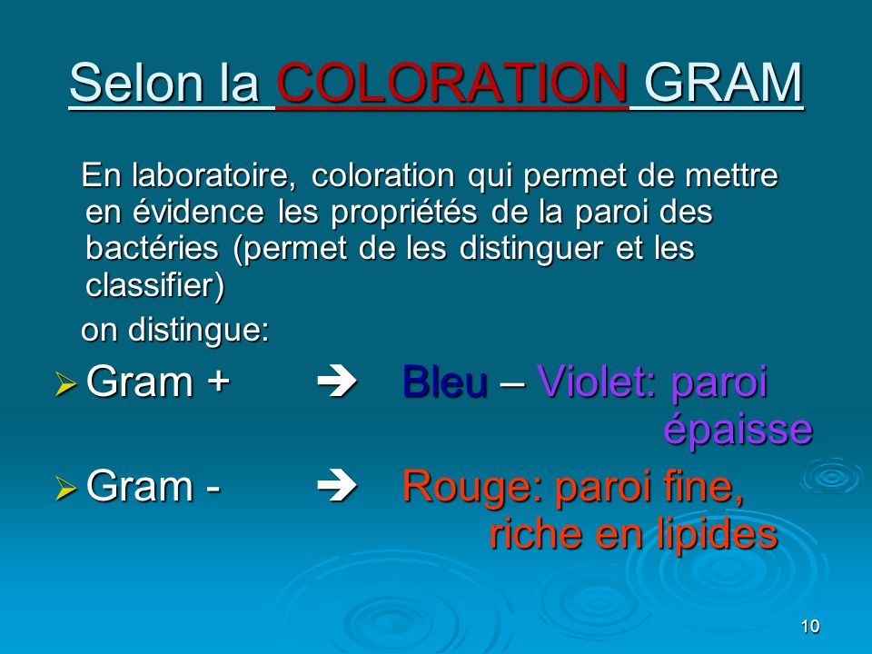Selon la COLORATION GRAM