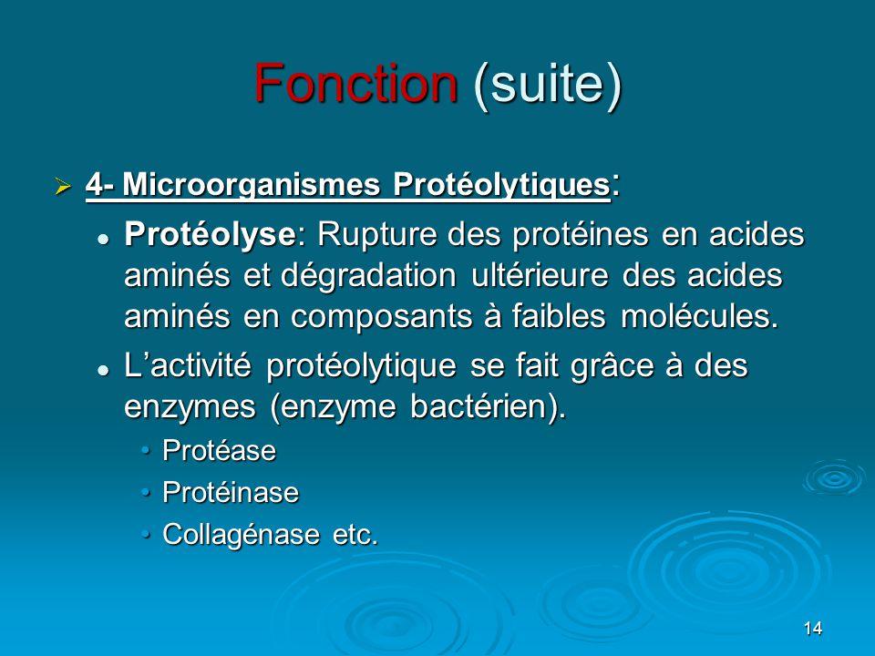 Fonction (suite) 4- Microorganismes Protéolytiques: