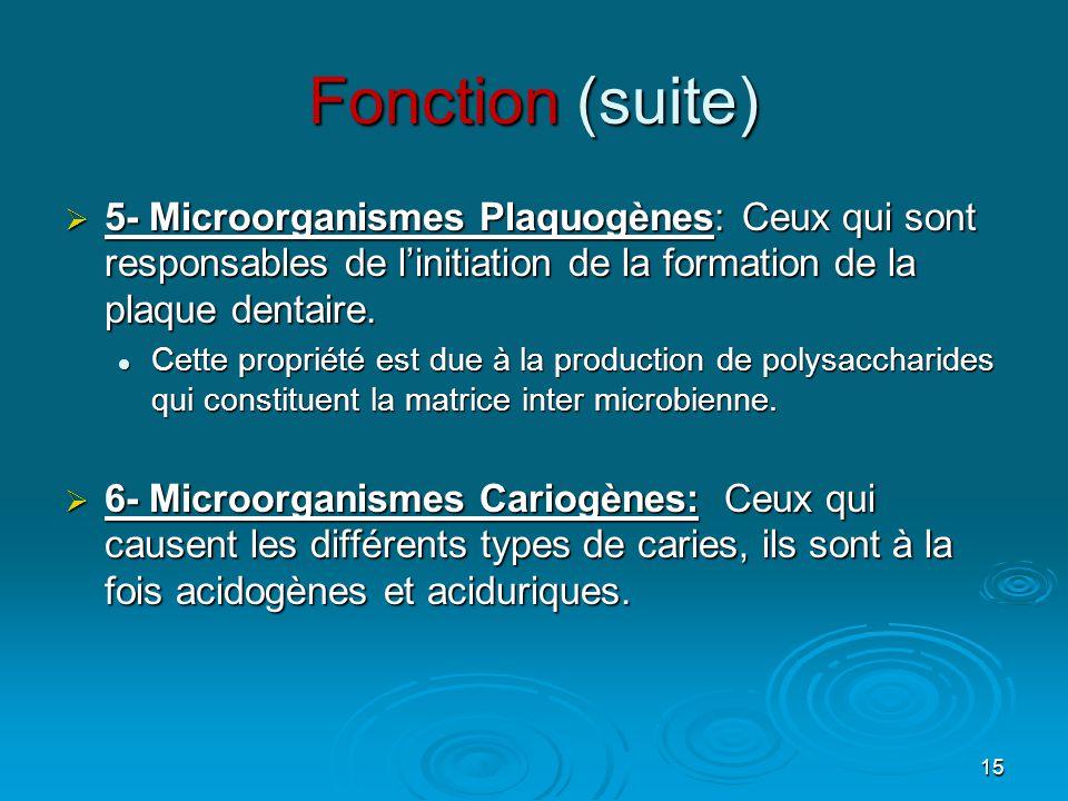 Fonction (suite) 5- Microorganismes Plaquogènes: Ceux qui sont responsables de l'initiation de la formation de la plaque dentaire.