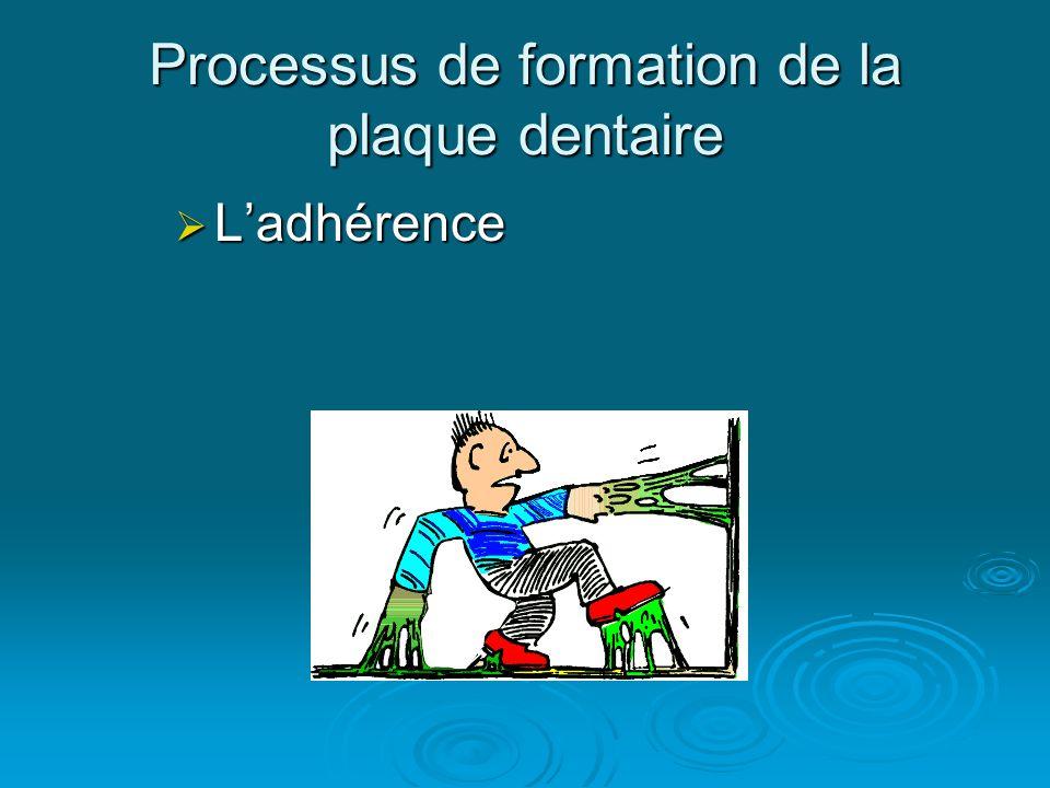 Processus de formation de la plaque dentaire