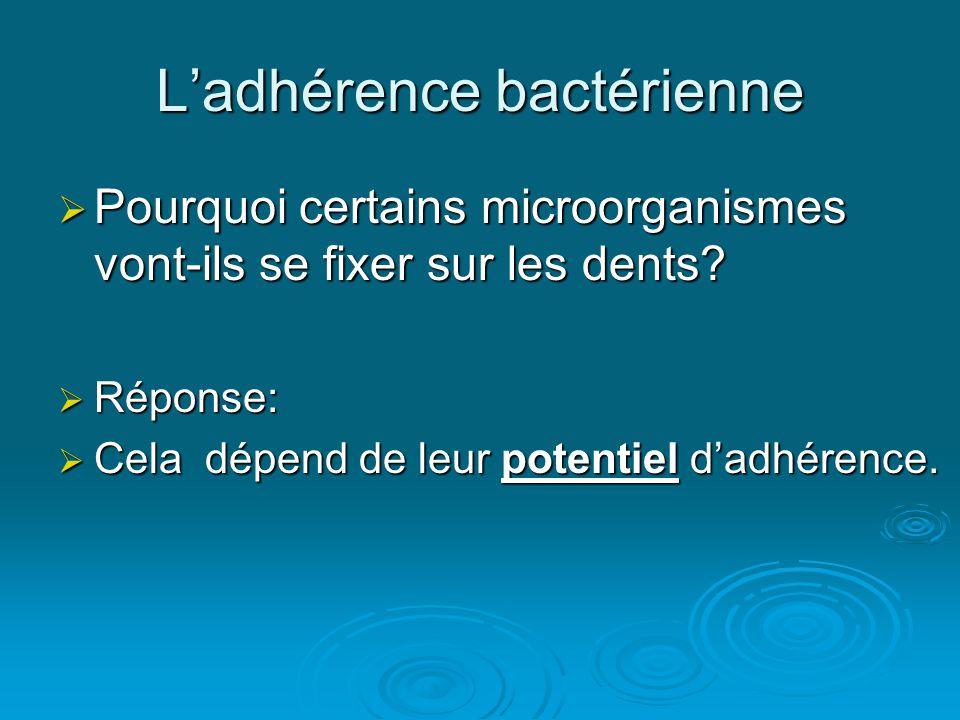 L'adhérence bactérienne