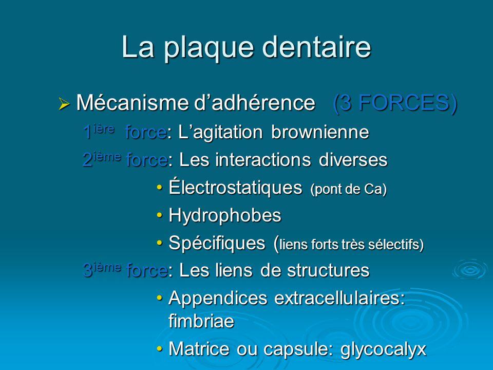 La plaque dentaire Mécanisme d'adhérence (3 FORCES)