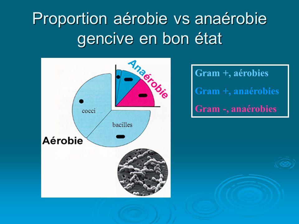 Proportion aérobie vs anaérobie gencive en bon état