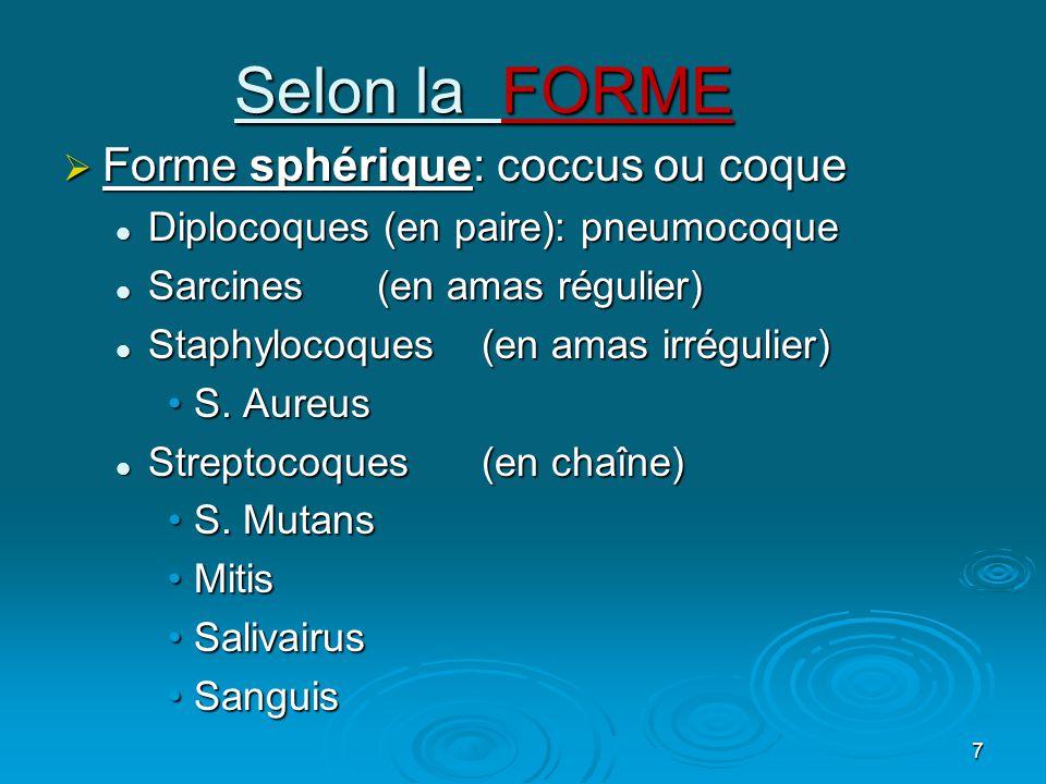 Selon la FORME Forme sphérique: coccus ou coque