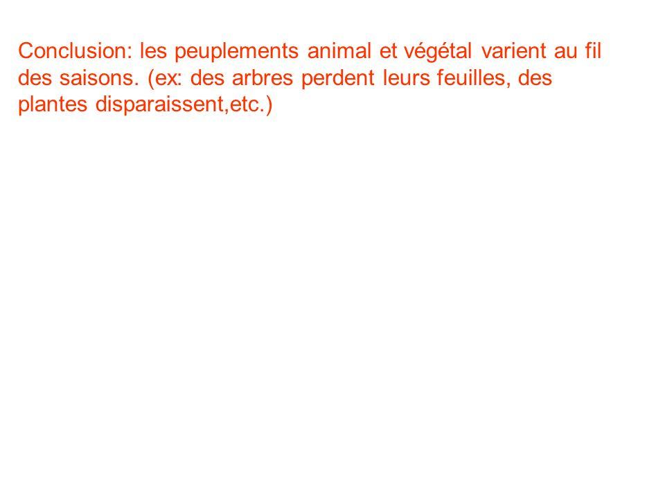 Conclusion: les peuplements animal et végétal varient au fil des saisons.
