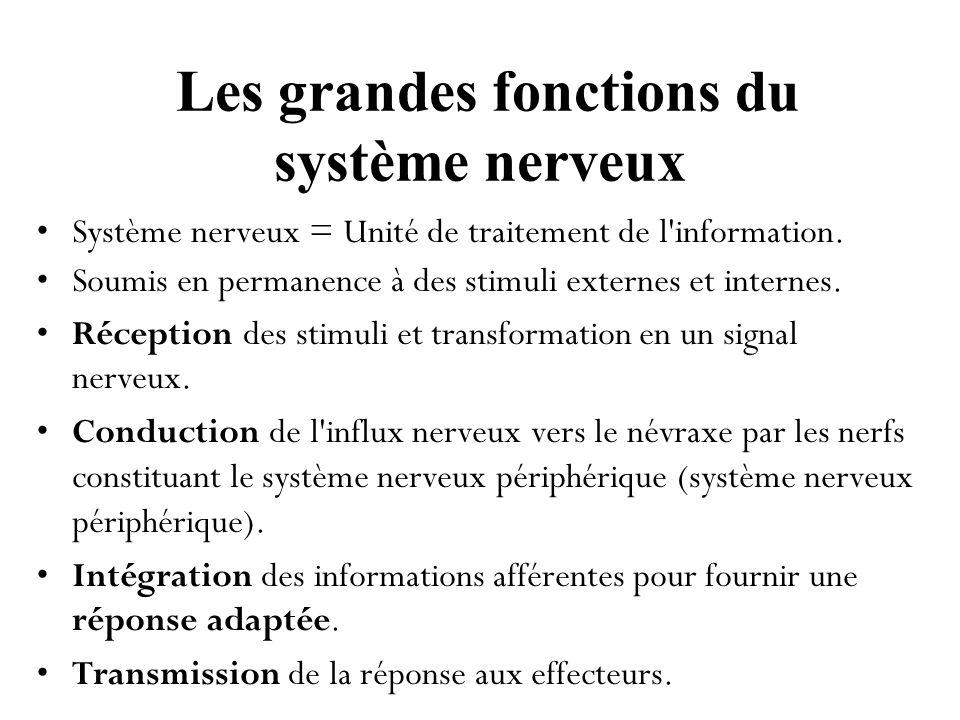 Les grandes fonctions du système nerveux