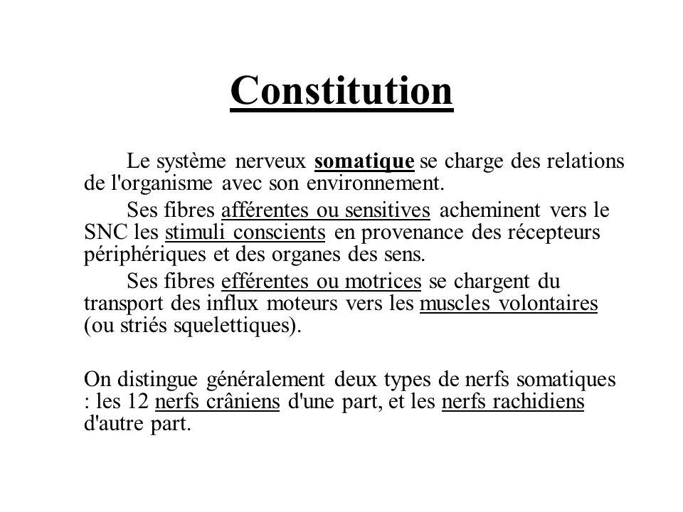 Constitution Le système nerveux somatique se charge des relations de l organisme avec son environnement.