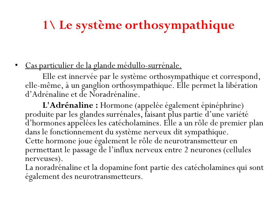 1\ Le système orthosympathique